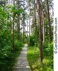 trail in the summer park