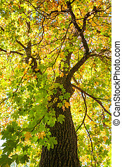 Sunshine through autumn foliage