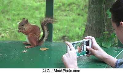 Feeding squirrels with hands - Squirrel eats from woman's...