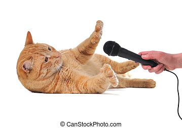Playful Cat with Microphone - Cat doesn't want to give...