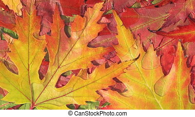 autumn leaves and water