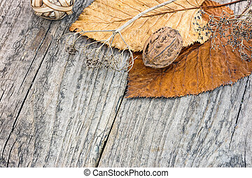 dry plants, withered fall leaves and nuts on rustic wooden...