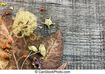 dry flowers and blooms, nuts and withered fall leaves on old...
