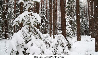 winter forest, slider