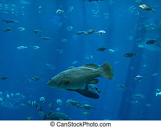Saltwater Fish - A photograph of fish in an ocean