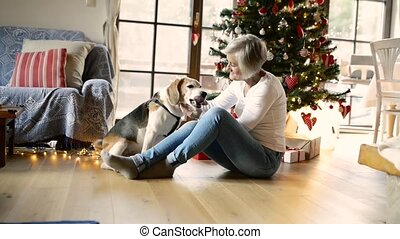 Senior woman with her dog at Christmas tree. - Beautiful...