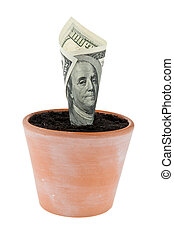 Dollar bill in flower pot Interest rates, growth - A dollar...