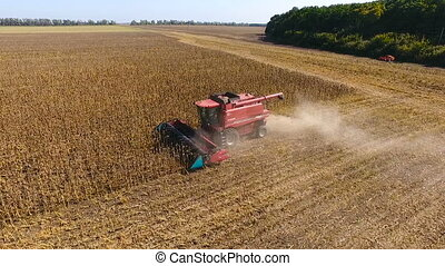 Combine harvest sunflower during the day. Aerial - Combines...