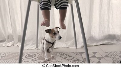 Dog sits under the highchair children's legs - Little boy...