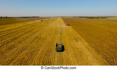 Combines harvest sunflower. Day. Aerial shoot - Combines...