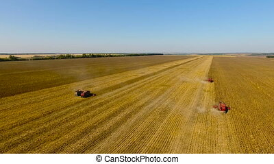 Red combines harvest sunflower during the day. Aerial shoot...