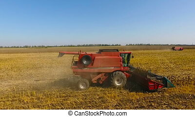 Combines harvest sunflower during the day. Aerial shoot. In...