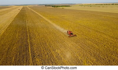 Combine harvest sunflower. During the day. Aerial shoot. In...