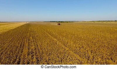 Combines harvest sunflower during the day. Aerial. In...