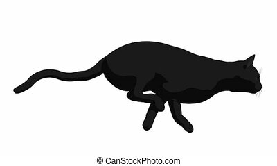 Black Cat - Black cat on a white background