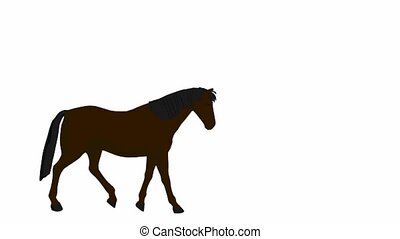Horse - Hose on a white background