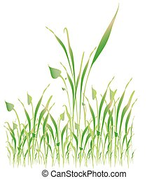 Green grass, object white isolated - Vector art in Adobe...