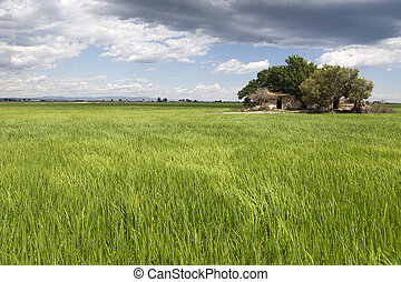 Classic Ebro delta landscape with its rice fields - Typical...