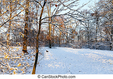 trees in the snow - the trees growing in nature in winter....