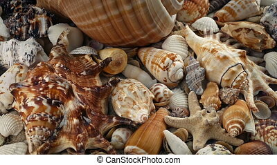 Many Pretty Seashells Rotating - Many pretty seashells...
