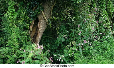 Old Hollowed Tree Among Plants And Flowers - Pretty forest...