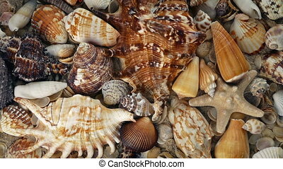 Overhead Shot Of Sea Shells Rotating - Many different...