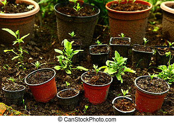 pot woth sprout plants on seedbed close up photo