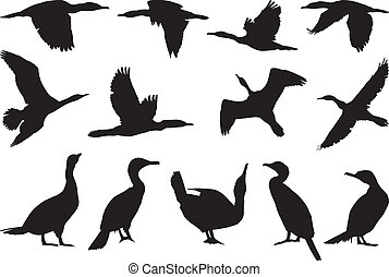 Collection cormorant - Collection of vector silhouettes on...