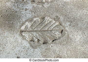 Cement flooring printed with leaves.background texture