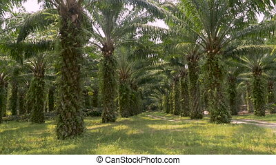 Symmetrical rows of palm trees used in the manufacturing of...