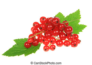 Currant fruit - Red currant fruit and green leaves. Botany...