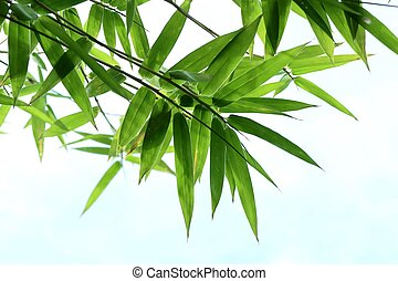 bamboo leaves in nature