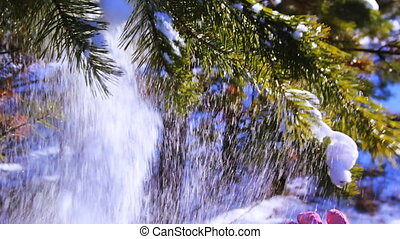 Motion shot of pine tree in the winter snowy forest
