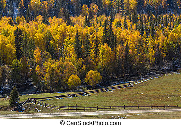 Autumn forest in the Gorny Altay, Russia.