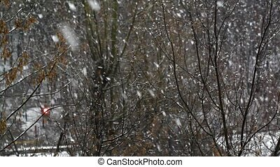Snowfall - Falling snow and bare twigs