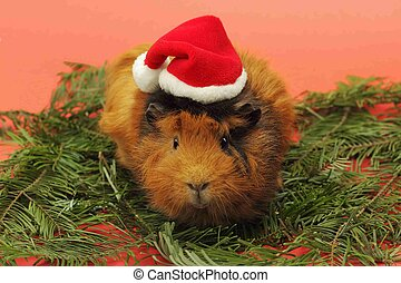 Guinea pig in Santa Clause hat - Soft focus on head of...