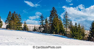 row of spruce trees on a snowy hillside. beautiful nature...