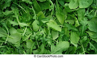 Green Leafy Rocket Salad Rotating - Leafy rocket salad...