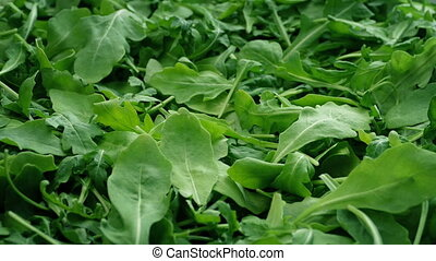 Green Leafy Rocket Salad - Closeup of leafy rocket salad...