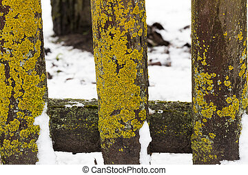 Old wooden fence - old ruined wooden and lichen, in the...