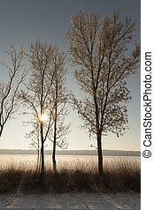 Winter time, close-up - a photo of trees growing in the...