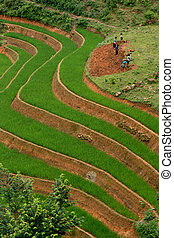 Rice Terrace Workers - Rice Paddy Terrace Workers
