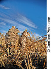 Two hunters shooting during bird hunting - Rear view of two...