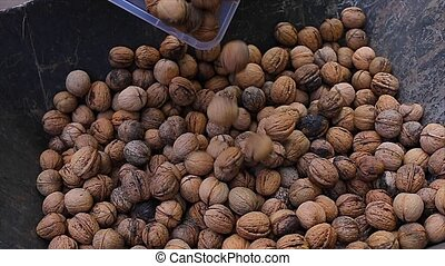 Walnuts in a pile - Pouring walnut harvest, slow motion from...
