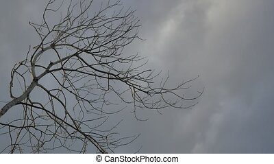 Dry tree branch on a grey sky background nature - Dry tree...