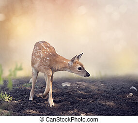 White-tailed deer fawn - Cute White-tailed deer fawn