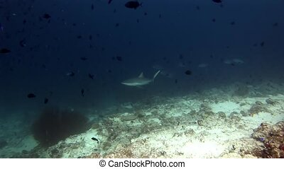 Sharks and tuna underwater on background of school fish in...