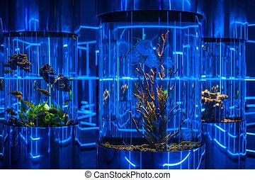 oceanarium interior photo - Interior photo in the oceanarium