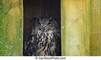 owl bubo on a green background,