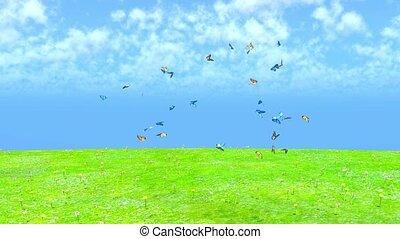 A swarm of butterflies and grasslands.